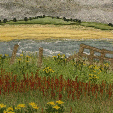 Ragwort and dock above Beadnell Bay, Northumberland  (14x28cms £250) by textile artist Mary Taylor