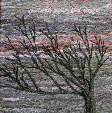 Wind shaped tree on the cliff near Far Arnside, Morecambe Bay (12x20.5 cms £160) by textile artist Mary Taylor