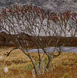 Trees at Ellishadder, NE Skye (14x28 £250) by textile artist Mary Taylor